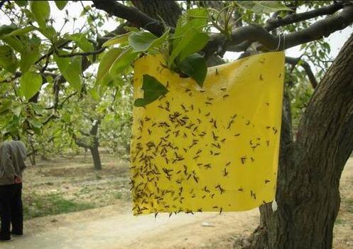 .环保防虫农业用具,双面胶粘虫板绿色 环保 无公害